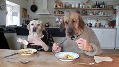 Δυο σκύλοι, ένα Λαμπραντόρ και ένα Μπροχόλμερ