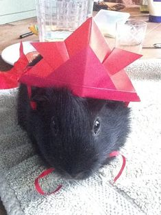 27 Guinea Pigs Wearing Hats