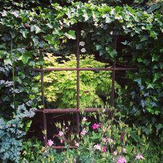 #kählersoas #trädgård #garden #mygarden #inmygarden #iminträdgård #instagarden #zon1 #skåne #skegrie #acer #växter #grönt #grönska #blickfång