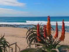 Jeffreys Bay, Eastern Cape, South Africa