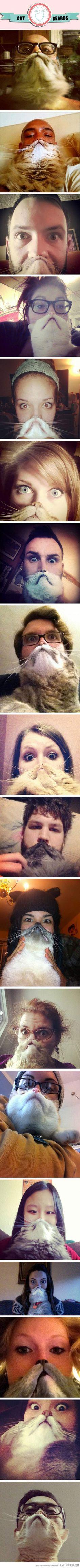Cat beards, cat beards everywhere…
