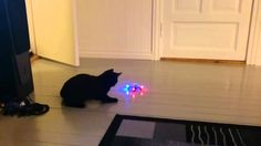 Cats getting scared by mini-drone