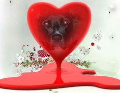 Hope your Valentine warms your heart and fulfills your every wildest day causing a barkathon. Leaving paw prints on your heart and soul Many a fur babies have found forever homes there are many mo...