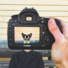 Some say pets look like their owners, but one Canadian photographer has taken it to a new and creative extreme. In his series, #petheadz, Zachary Rose (@zachdriftwood) takes DSLR portraits of people's pets and mashes them up with portraits of their owners by cleverly holding the camera in the foreground.