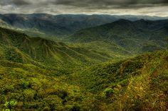 Mata Atlântica :: Serra da Gandarela - Atlantic forest
