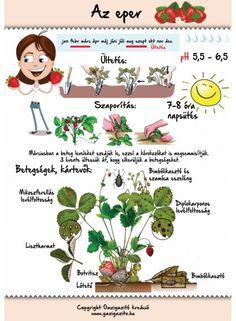 Erdei szamóca, szamóca, eper, Fragaria vesca - gazigazito.hu Easy Garden, Herb Garden, Garden Plants, Home Vegetable Garden, Home And Garden, Back Garden Landscaping, Medicinal Plants, Back Gardens, Garden Projects