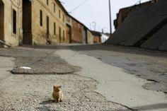 Spookachtig mooie beelden van desolate gebouwen: Een klein poesje in de lege straten van Peleas de Abajo in het noordwesten van Spanje.© Reuters