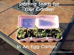 Starting Seeds In An Egg Carton! The Kids And I Worked On A DIY #Garden Project Together! #EASY #DIY #Gardening #Upcycle #project #home #vegetables #fruit