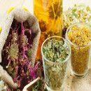 6 plantas medicinales con acción antiinflamatoria y analgésica para reducir la inflamación y el dolor de forma natural | ECOagricultor