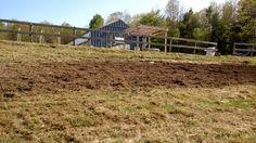 Lettuce on the way #gardenmaine