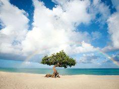Beautiful Aruba: Picture-postcard island images