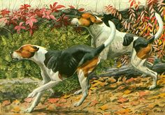 This animal painting marked by Louis Agassiz #Fuertes is taken from The Book of Dogs published in 1919 by The  National Geographic Society, Washington D.C., U.S.A.  Louis Ag... #fuertes #dog