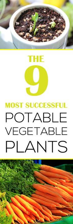 The 9 Most Successful Potable Vegetable Plants