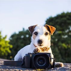 Heres the cutest LUMIX photographer weve ever seen!   @wavethatstranger with the LUMIX GX8