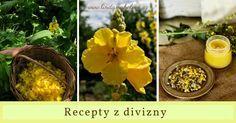 Jak použít květy divizny? Vyrobte si mast, olej, tinkturu a nálev z květů. Health Advice, Herbalism, Plants, Herbal Teas, Herbal Medicine, Plant, Planets