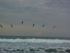 Pelicans skim the waves on the beach at Villa La Fiaca