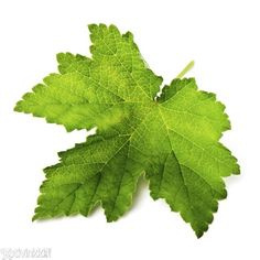 Louhisaaren juoma | Kotivinkki Plant Leaves, Berries, Stuffed Mushrooms, Food And Drink, Baking, Drinks, Plants, Recipes, Stuff Mushrooms