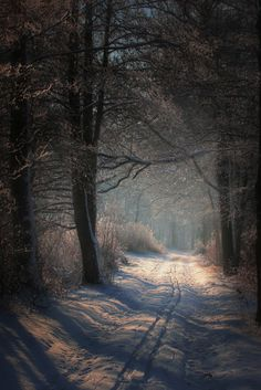Snowy Country Road at Dusk | Content in a Cottage