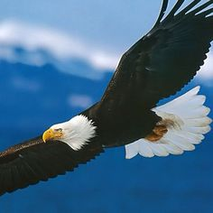 How wonderful to see these majestic birds all the time here!