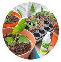 52 Best ROOT!T® - An Innovation In Propagation images in
