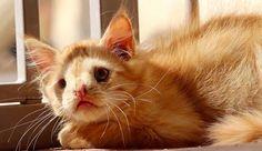 Romeo, rudy kotek urodził się z deformacją pyszczka, która sprawia, że różni się trochę od innych kotków. Niestety ten defekt sprawił, że kotek jeszcze nie zaznał prawdziwej miłości i czułości. Został pozostawiony i nazwany przez kogoś, że jest za brzydki aby ktokolwiek go chciał. Całe szczęście znalazły się osoby, które