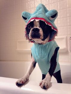 fun dog outfit.