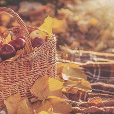 good harvest: Cesta llena de manzanas orgánicas jugosas rojas con hojas amarillas en otoño al aire libre con el sol a contraluz suave. Buena cosecha de manzanas en otoño. Concepto de vacaciones de Acción de Gracias. Foto de archivo