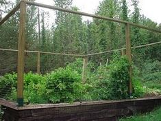 garden fence kit could do with 1 6 ft bamboo poles from job lots gardening pinterest gardens garden ideas and need to