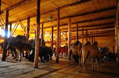 Dutchman Johan Huibers Opens His Life-Size Noah's Ark to the P...