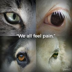 cows or cats piglets or puppies all animals feel pain #crueltyfree #compassion #vegan