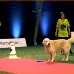 I Dont Care, Iam A Hungry Golden Retriever And Have No Time For Funny Games :) (A Hilarious Video)  Have you tried joining a dog race with your beloved pet? Of course, if you are on a dog race, your pet should be the fastest and the smartest for you to win.  During the training, you will not only practice his speed upon doing the tricks; but you will also practice his concentration. However, what is your reaction if your dog is distracted on the race?  What would your dog do in thi..