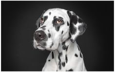 Human Like Dog Portraits by Ralph Hargarten