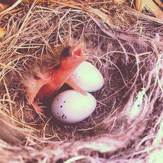 Baby Tree Swallow :3