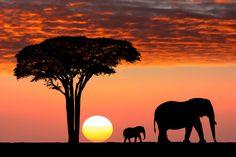 اللقطة الأفريقية المثالية محمية سيرينجيتي الوطنية تنزانيا