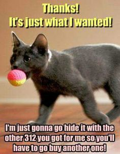 Pretty much the experience of owning a cat in a few words