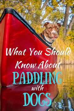 Your dog would love to spend a day on the water with you! This guide covers ever… Your dog would love to spend a day on the water with you! This guide covers everything you need to know about paddling… Continue Reading → Canoe Camping, Canoe Trip, Canoe And Kayak, Camping Guide, Outdoor Dog, Outdoor Travel, Outdoor Living, Kayaking With Dogs, Dog Friendly Hotels