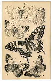 butterfly vintage illustrations - Google Search