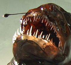 Deep-sea creatures – Te Ara Encyclopedia of New Zealand