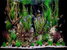 ideas for tropical aquariums | 18 Photos of the How to Create Aquarium Decoration Themes