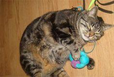 Dieses Mal durfte unser Katzendiva Jeammy etwas testen, Dank kjero! Die zuckersüßen Herzverpackungen von Vitakraft Poésie, ein Katzennassfutter  abgestimmt auf die ernährungsphysiologischen Bedürfnisse von Katzen – für ein glückliches Katzenleben, hat mich sofort angelacht.