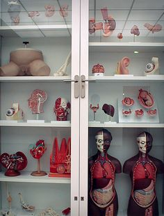 Damien Hirst by Pierre Beteille, via Flickr
