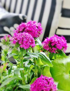 Easy Tip To Create a Container Garden
