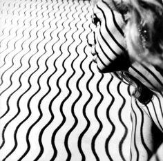 Photography by Aldo #Ballo, 1960 • #Stripes