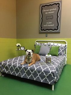 The 10 Most Luxurious Dog Hotels Across The Country 10 of the best dog hotel rooms across the country featuring treadmills, pool time, snuggling and rub downs. Dog Boarding Kennels, Pet Boarding, Luxury Dog Kennels, Dog Bedroom, Puppy Room, Dog Playground, Pet Hotel, Pet Resort, Dog Area