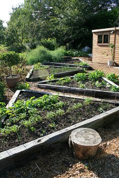 raised bed triangles...I really like this design.It leaves room to get to at all sides of everything.
