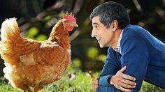 Huhn und Co, eine Reportage über Hühner heute