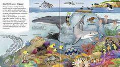 Výsledek obrázku pro blauwal leben