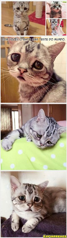 O gato que representa a depressão pré-segunda.