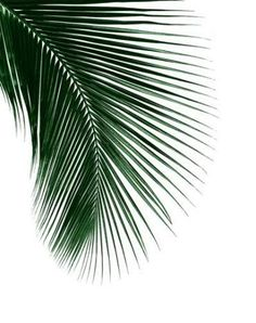 Another simple but beautiful print. Another simple but beautiful print. The post Another simple but beautiful print. appeared first on Fotowand ideen. Wallpaper Spring, Tropical Wallpaper, Tree Wallpaper Iphone, Plant Wallpaper, Palm Leaf Wallpaper, Wallpaper Ideas, Phone Wallpapers, Mode Poster, Poster Poster