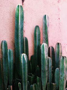 Cactus ☀️ Chez Séraphine venez découvrir nos jolies collections grossesse printemps/Eté ici : http://www.seraphine.fr